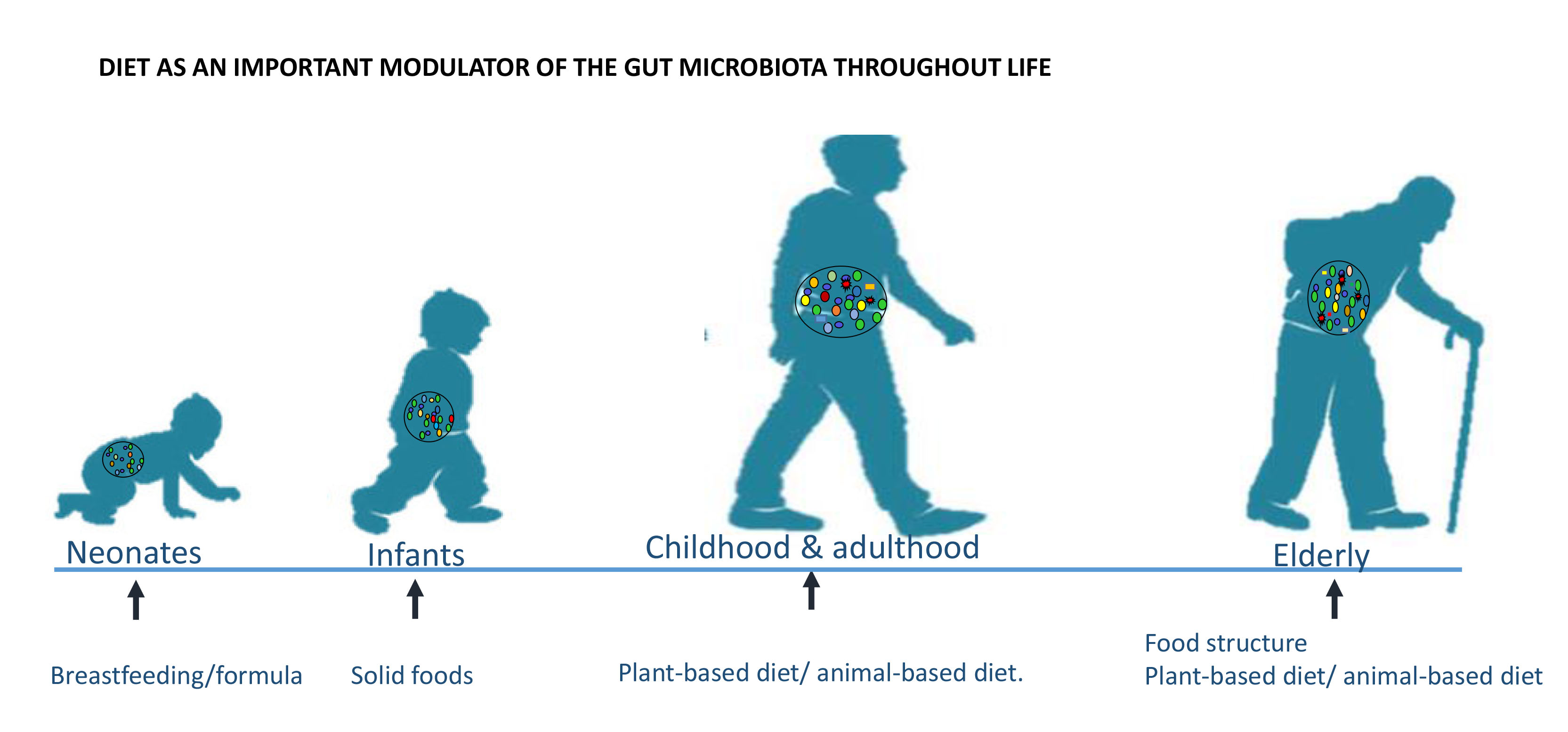 /Assets/images/graphical abstract_pics.jpg,the-effect-of-diet-on-the-fluctuations-of-human-gut-microbiota,gut microbiota; dietary intervention; dietary patterns,gut-microbiota,dietary-intervention,dietary-patterns,